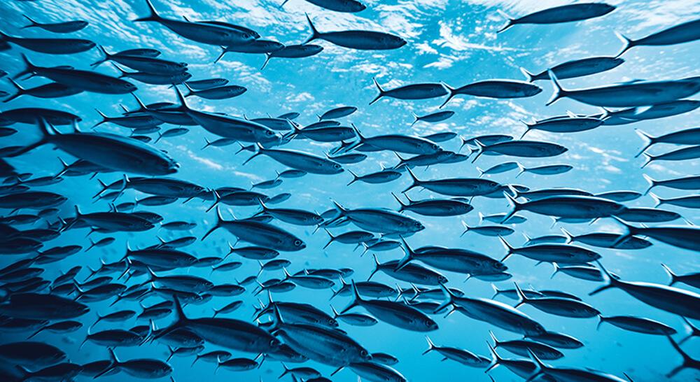 Tropische Fische schwimmen im Schwarm
